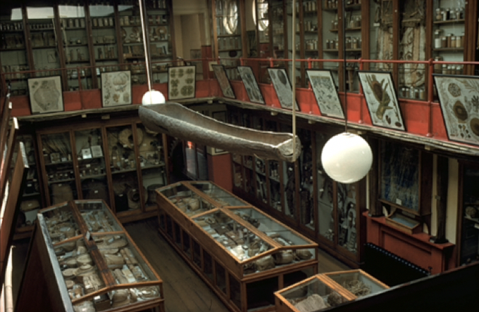 Interior of the original Museum of Economic Botany, c. 1960 (© RBGK)